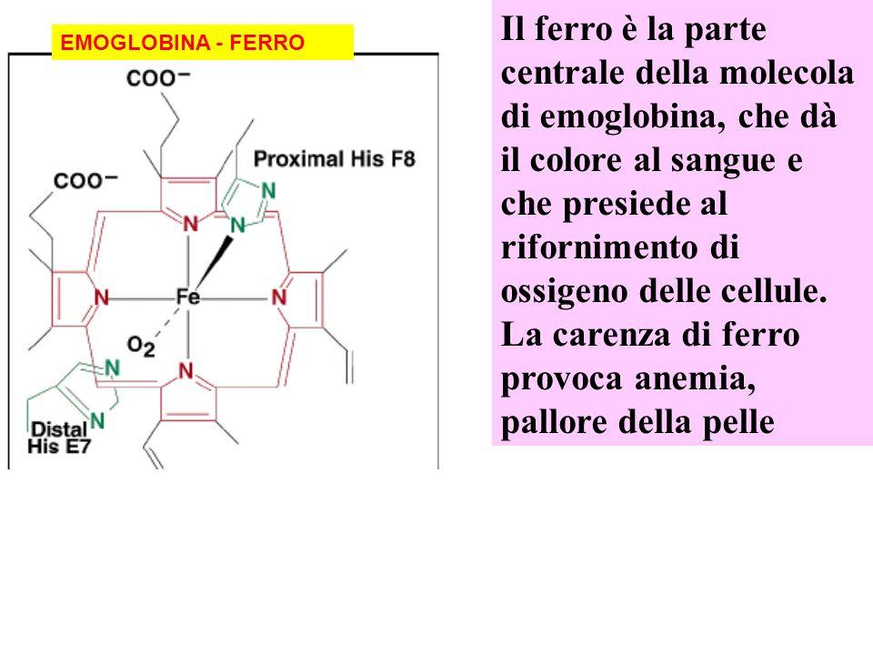 Il ferro è la parte centrale della molecola di emoglobina, che dà il colore al sangue e che presiede al rifornimento di ossigeno delle cellule. La carenza di ferro provoca anemia, pallore della pelle