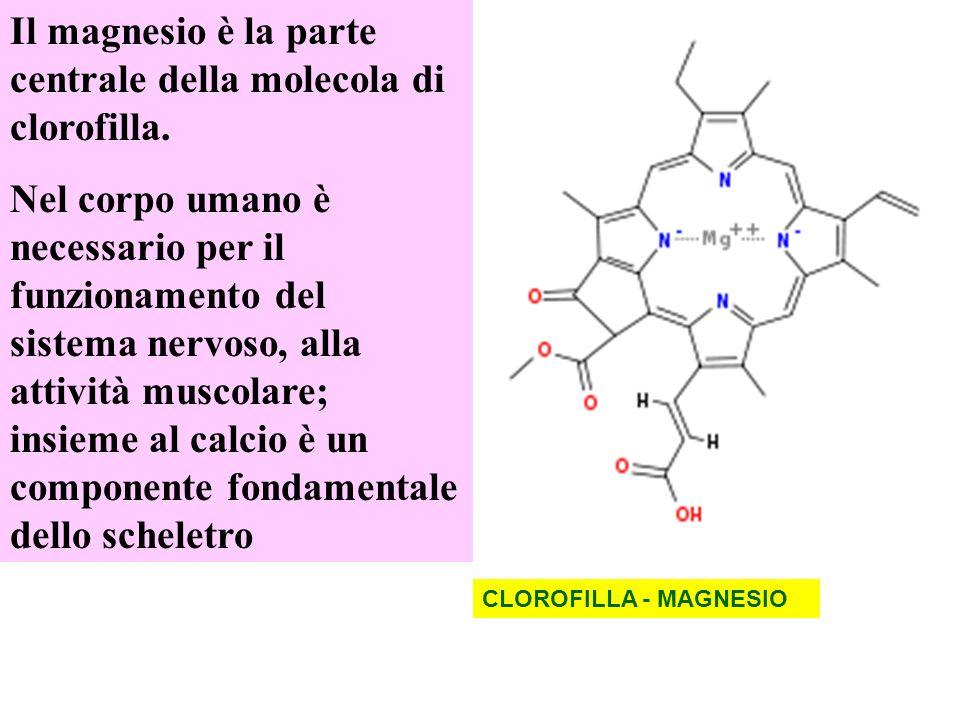 Il magnesio è la parte centrale della molecola di clorofilla.