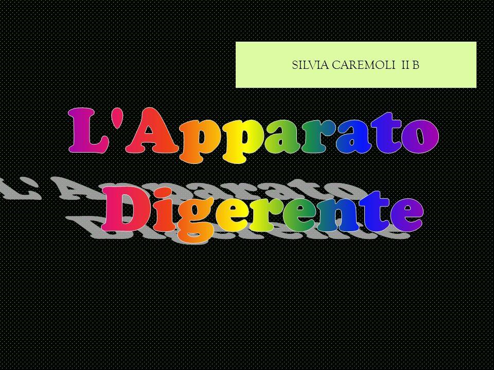 SILVIA CAREMOLI II B L Apparato Digerente