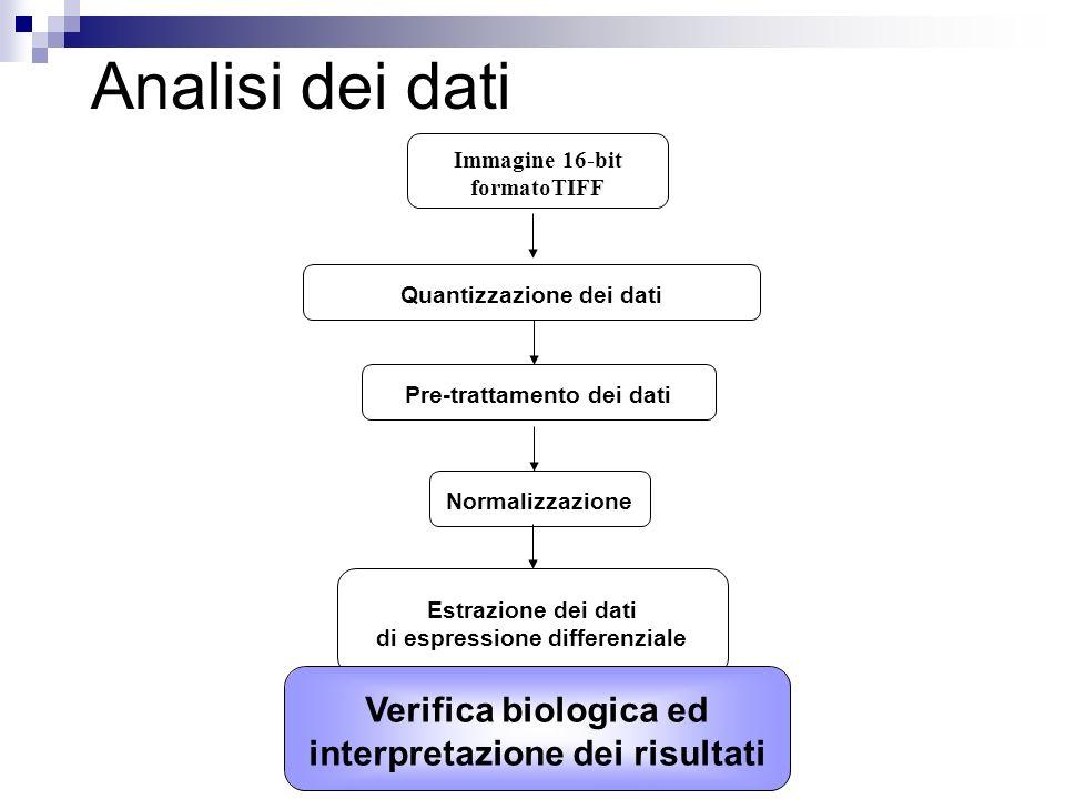 Analisi dei dati Verifica biologica ed interpretazione dei risultati
