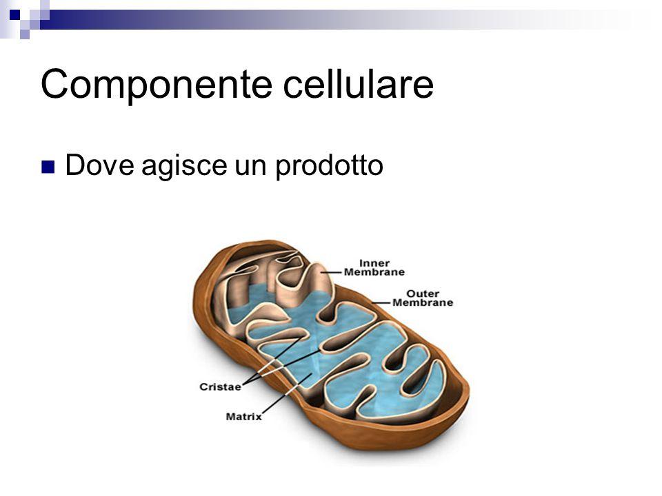 Componente cellulare Dove agisce un prodotto