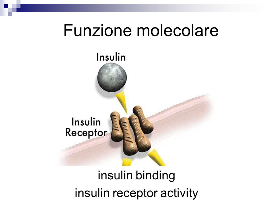 insulin receptor activity