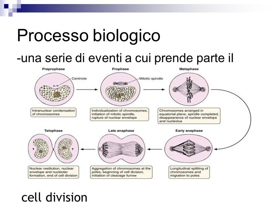 Processo biologico -una serie di eventi a cui prende parte il prodotto