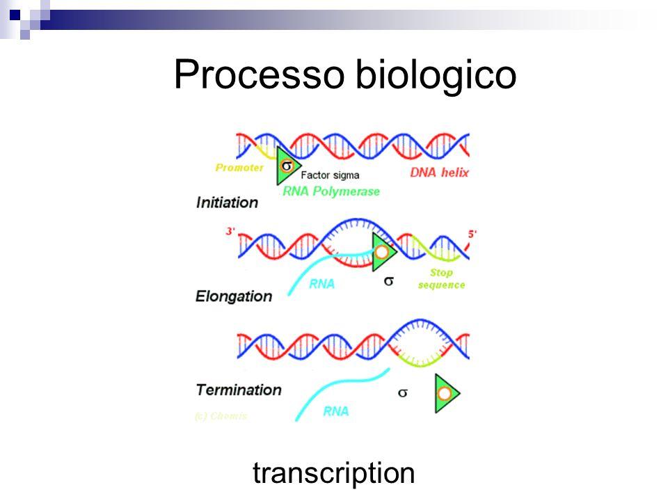 Processo biologico transcription