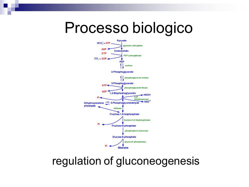 regulation of gluconeogenesis