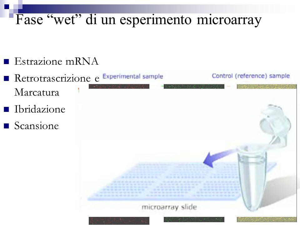 Fase wet di un esperimento microarray