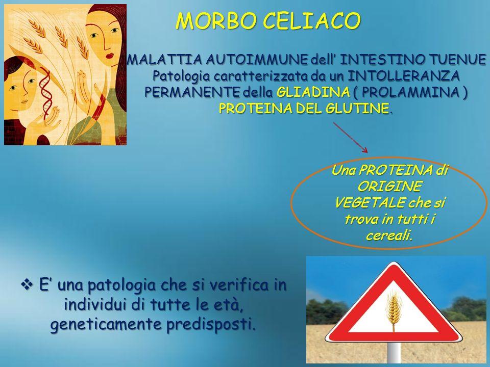 MORBO CELIACO MALATTIA AUTOIMMUNE dell' INTESTINO TUENUE.