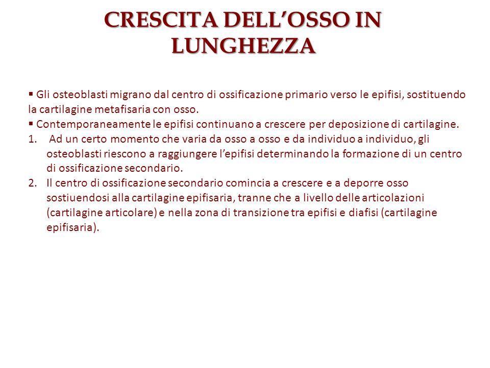 CRESCITA DELL'OSSO IN LUNGHEZZA