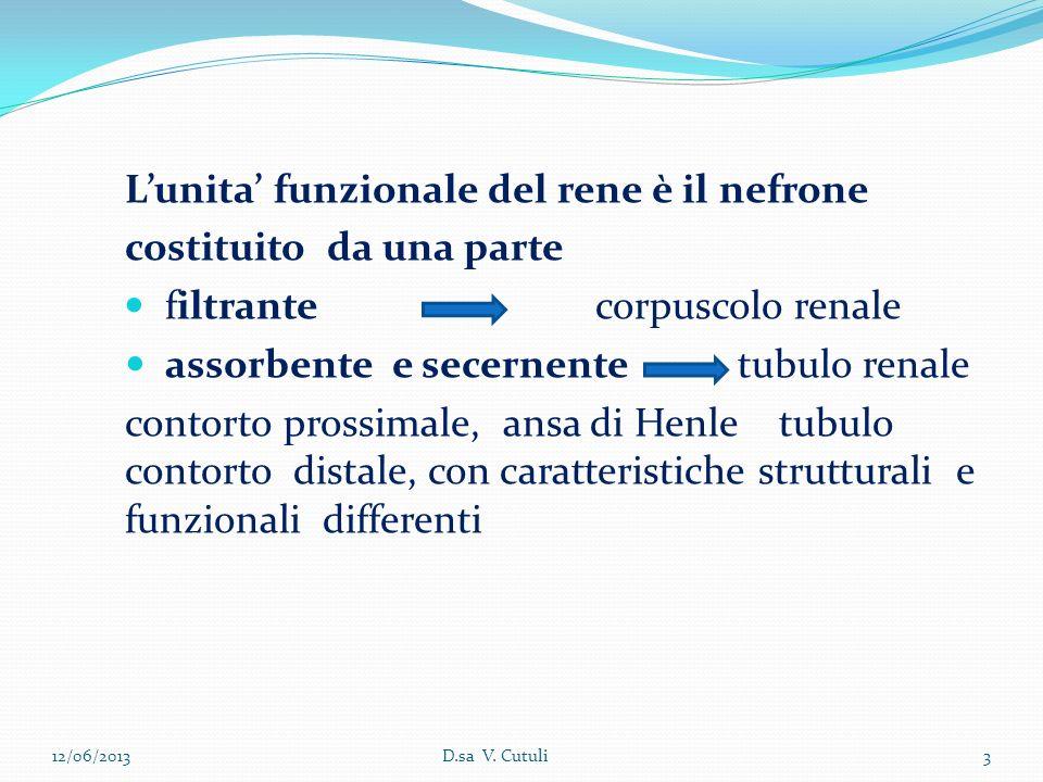 L'unita' funzionale del rene è il nefrone costituito da una parte