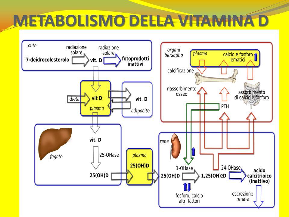 METABOLISMO DELLA VITAMINA D