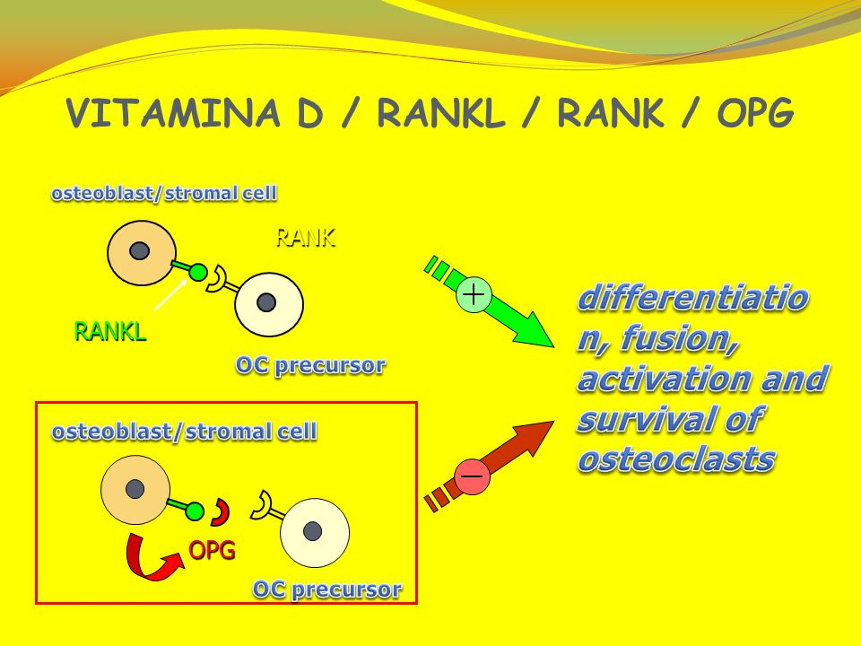 VITAMINA D / RANKL / RANK / OPG