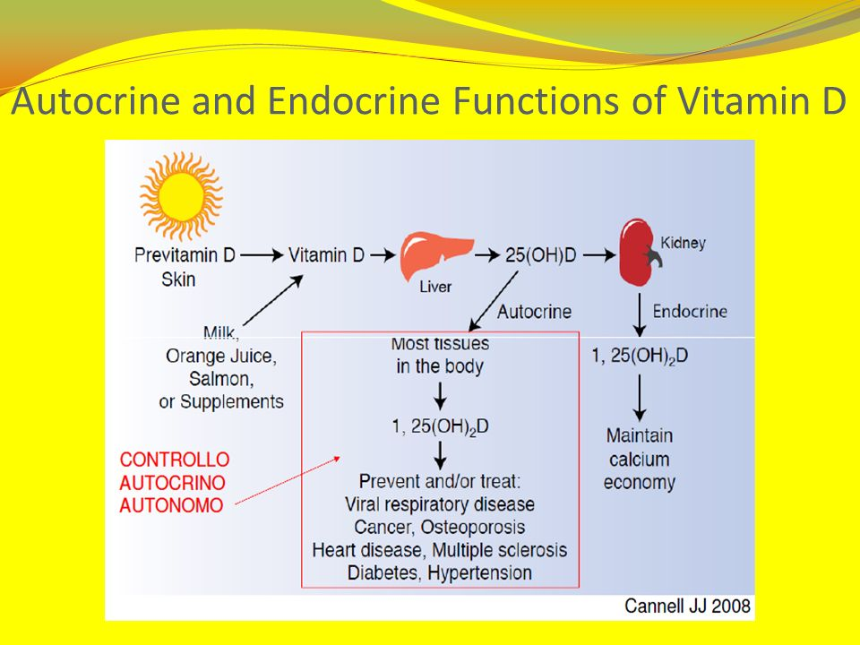 Autocrine and Endocrine Functions of Vitamin D