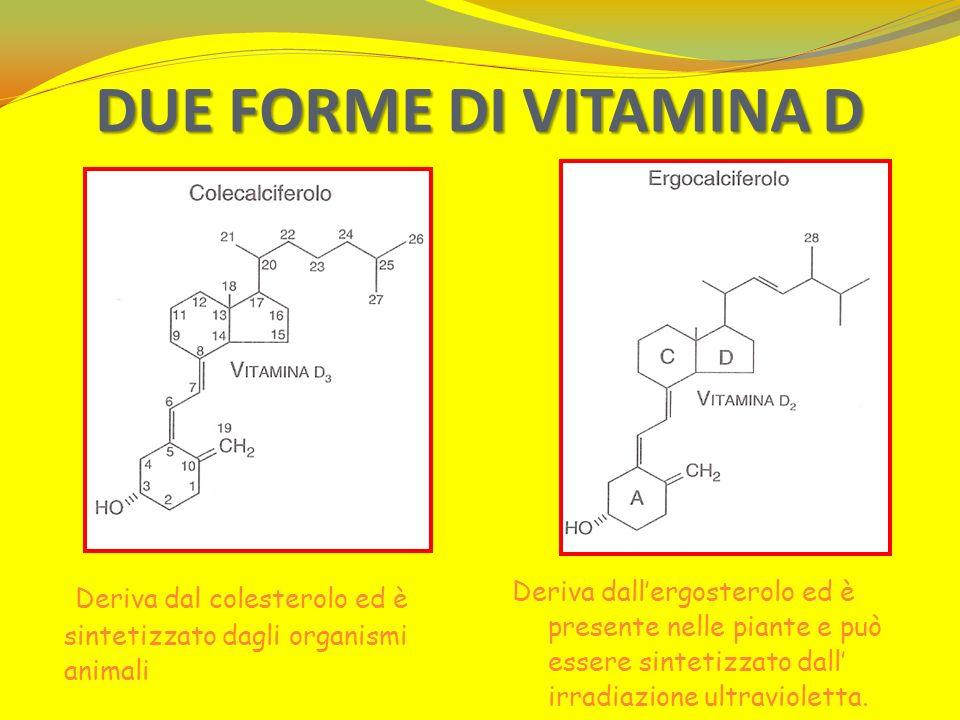 DUE FORME DI VITAMINA D Deriva dall'ergosterolo ed è presente nelle piante e può essere sintetizzato dall' irradiazione ultravioletta.