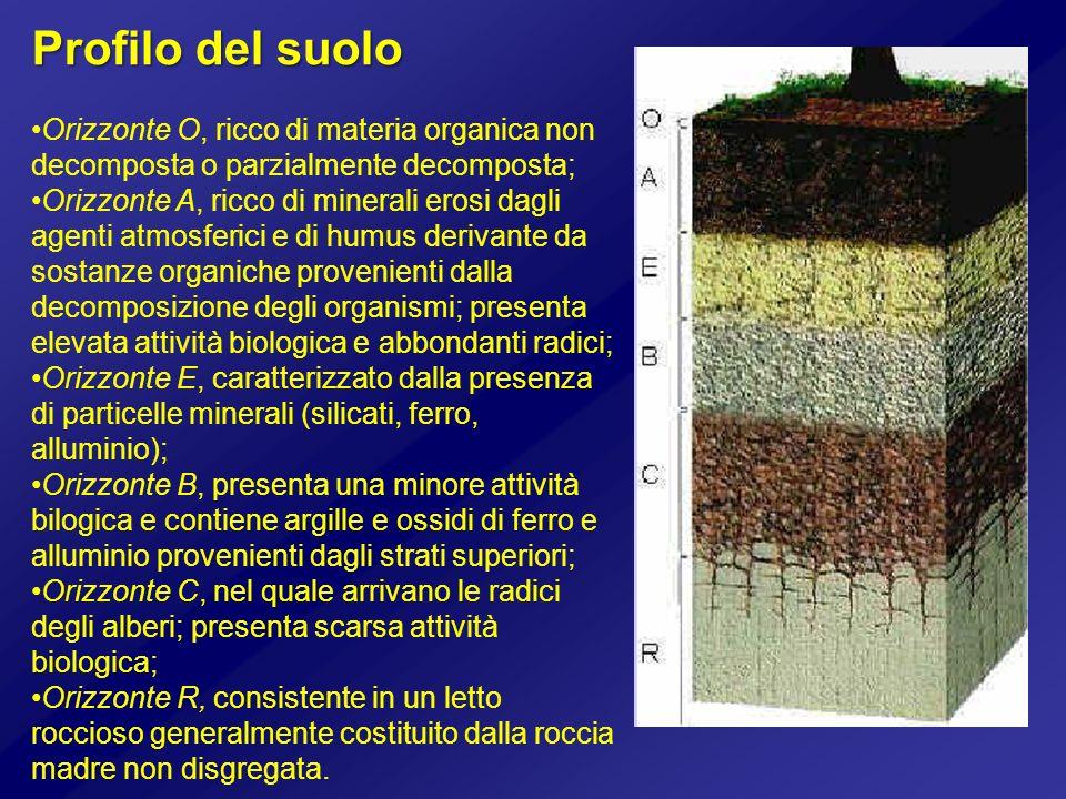 Profilo del suolo Orizzonte O, ricco di materia organica non decomposta o parzialmente decomposta;