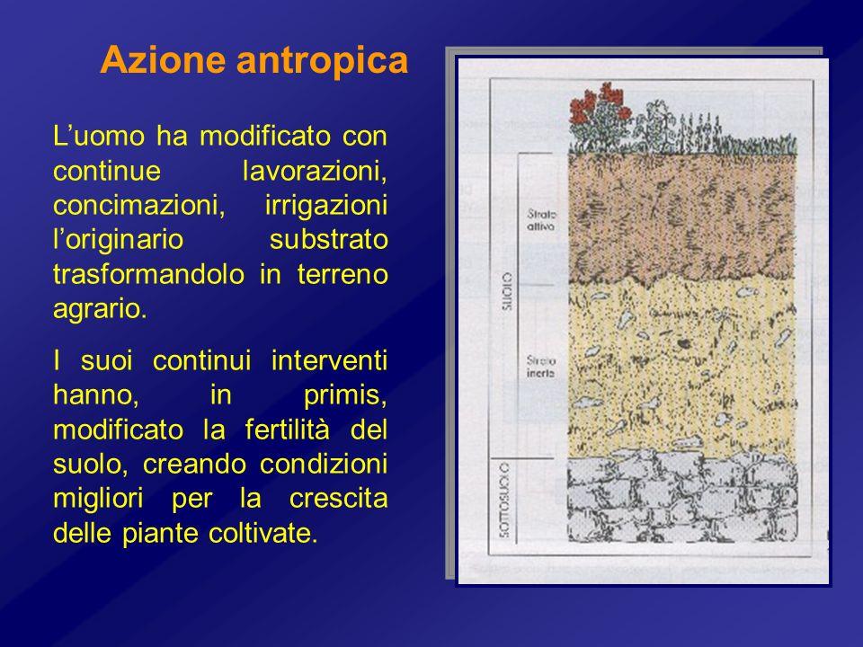 Azione antropica L'uomo ha modificato con continue lavorazioni, concimazioni, irrigazioni l'originario substrato trasformandolo in terreno agrario.