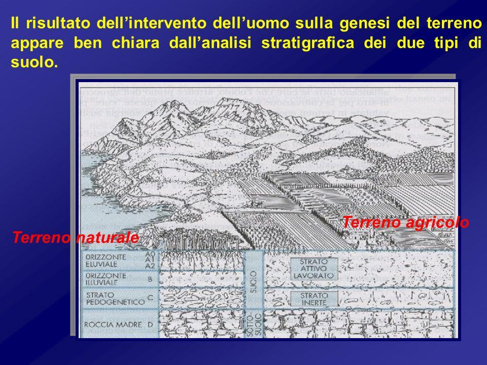 Il risultato dell'intervento dell'uomo sulla genesi del terreno appare ben chiara dall'analisi stratigrafica dei due tipi di suolo.