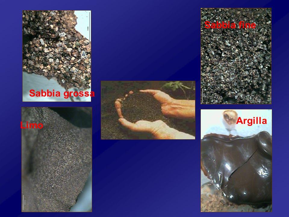 Sabbia fine Sabbia grossa Argilla Limo