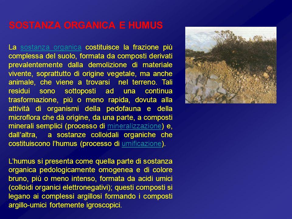 SOSTANZA ORGANICA E HUMUS