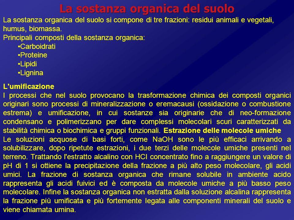 La sostanza organica del suolo