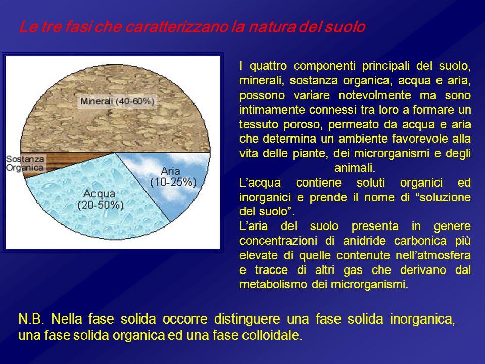 Le tre fasi che caratterizzano la natura del suolo