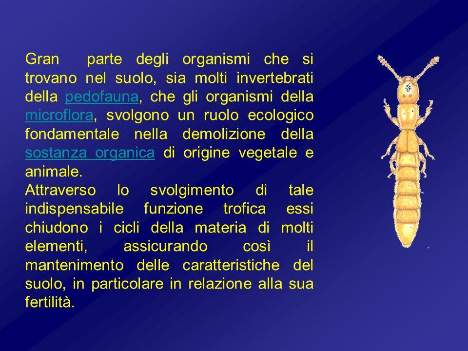 Gran parte degli organismi che si trovano nel suolo, sia molti invertebrati della pedofauna, che gli organismi della microflora, svolgono un ruolo ecologico fondamentale nella demolizione della sostanza organica di origine vegetale e animale.
