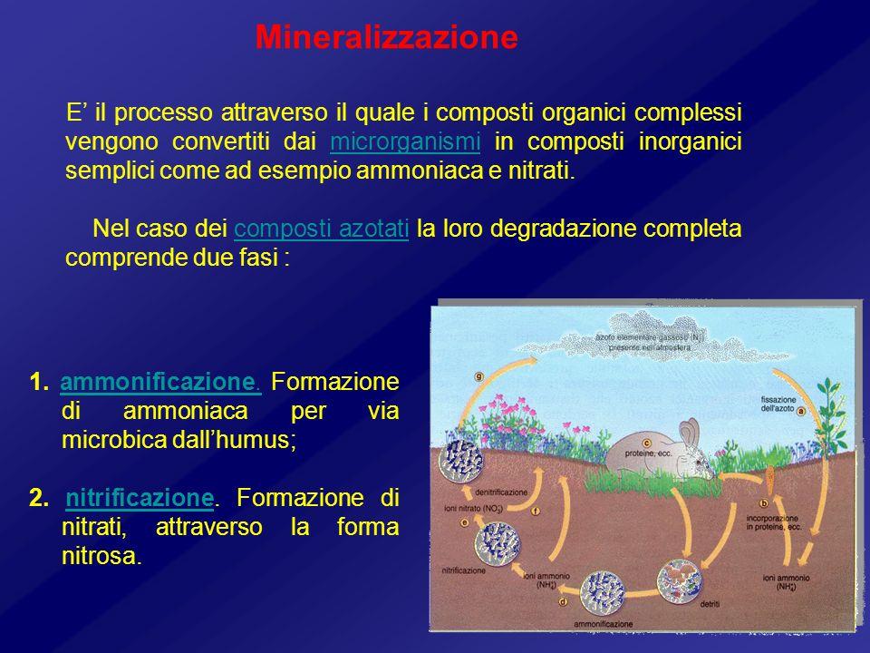 Mineralizzazione