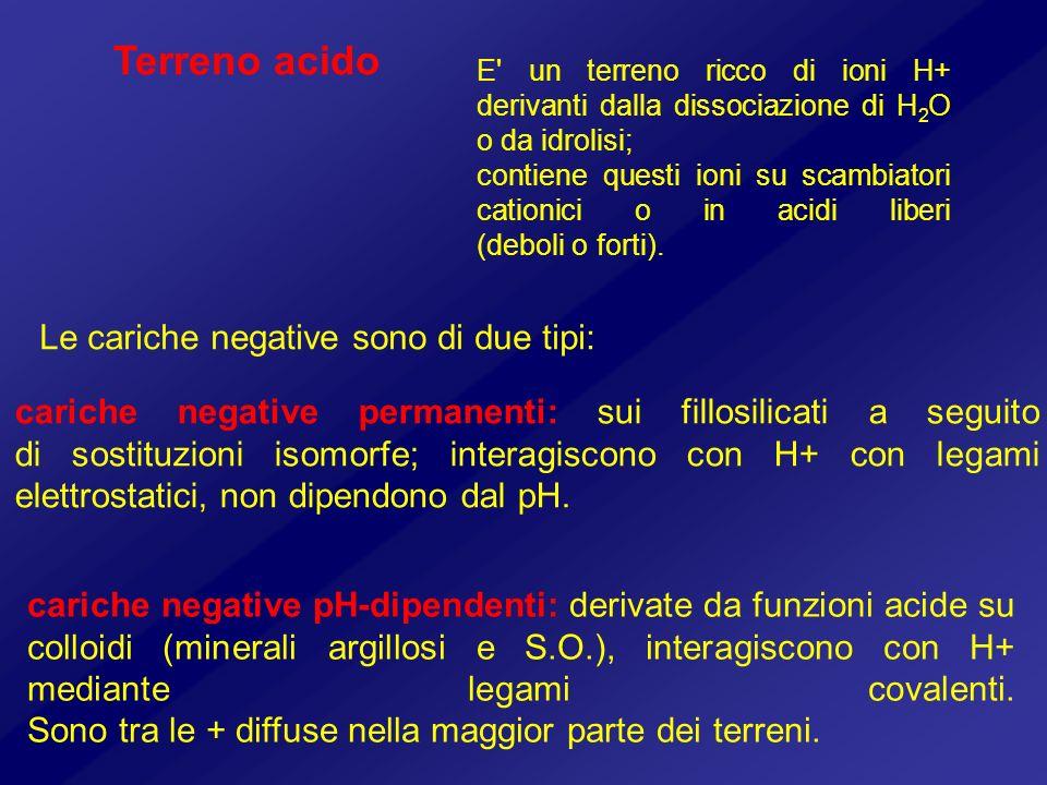 Terreno acido Le cariche negative sono di due tipi: