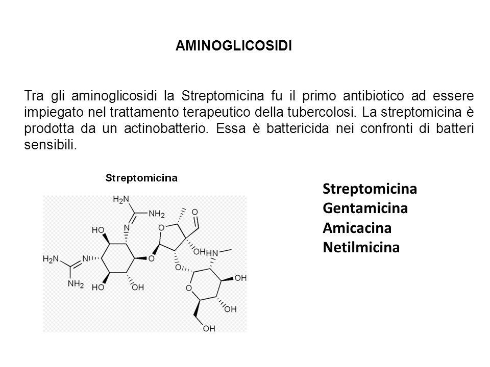 Streptomicina Gentamicina Amicacina Netilmicina AMINOGLICOSIDI