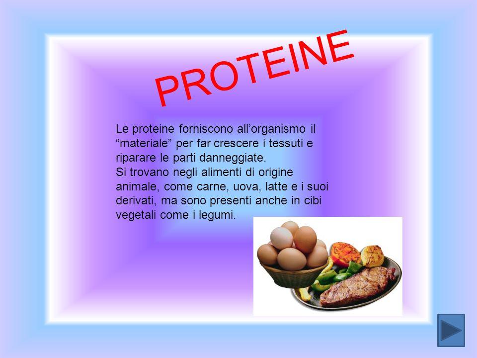 PROTEINE Le proteine forniscono all'organismo il materiale per far crescere i tessuti e riparare le parti danneggiate.