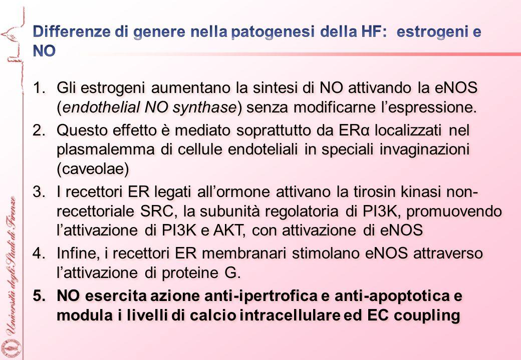 Differenze di genere nella patogenesi della HF: estrogeni e NO