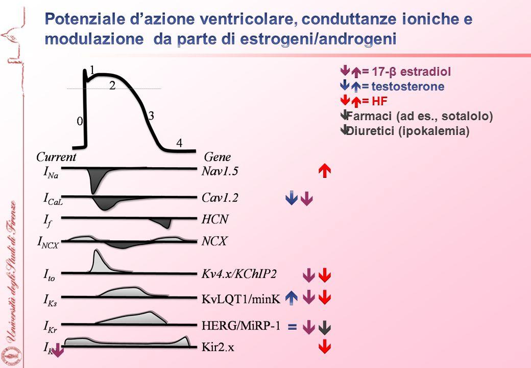 Potenziale d'azione ventricolare, conduttanze ioniche e modulazione da parte di estrogeni/androgeni