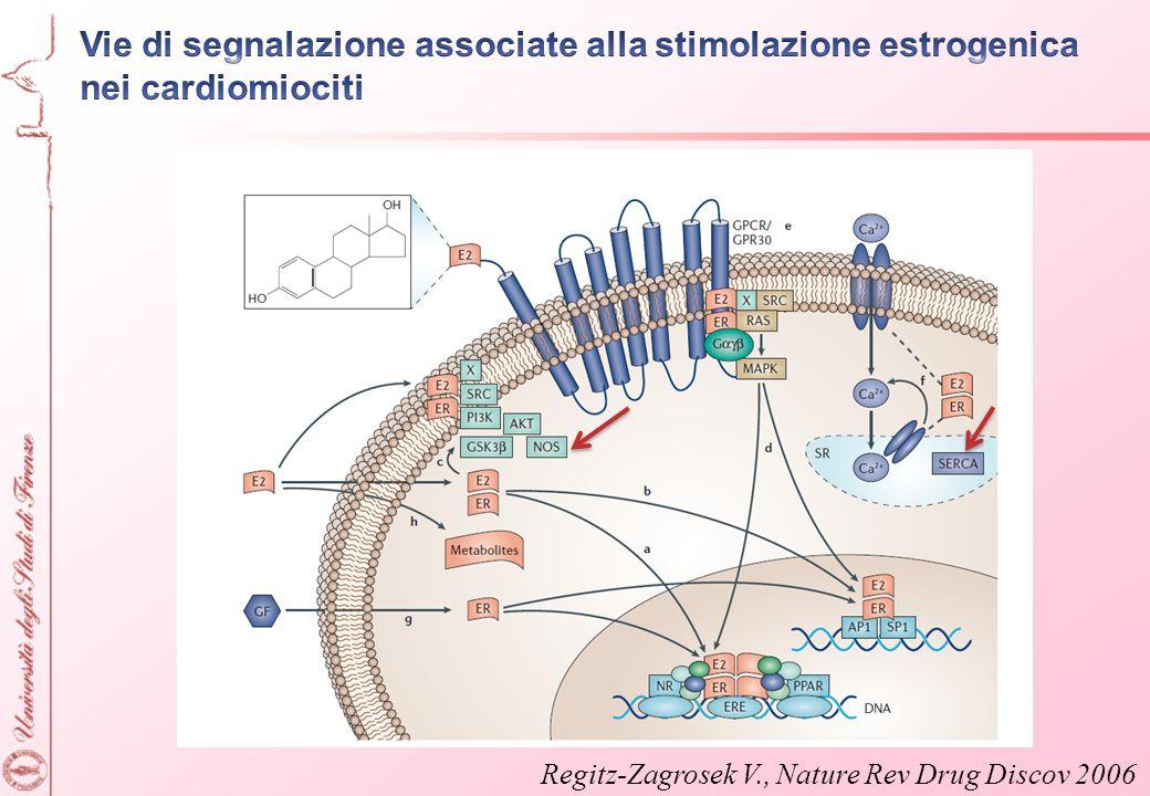 Vie di segnalazione associate alla stimolazione estrogenica nei cardiomiociti