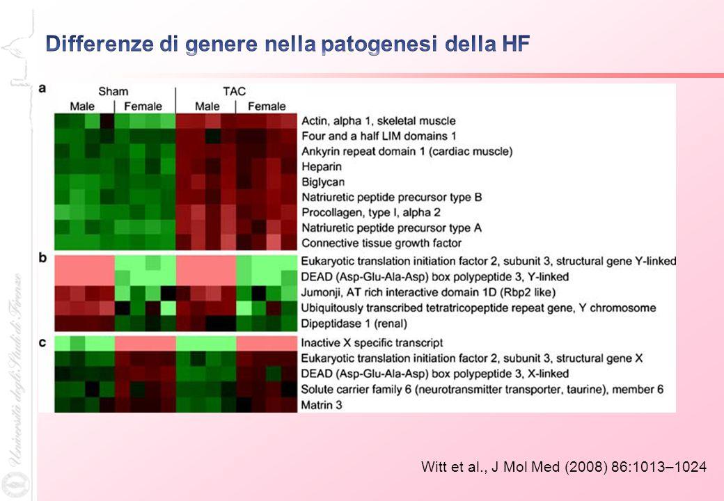 Differenze di genere nella patogenesi della HF