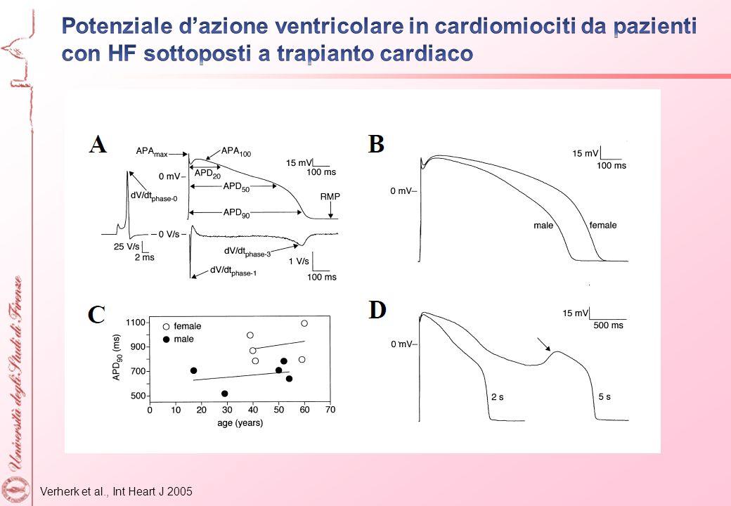 Potenziale d'azione ventricolare in cardiomiociti da pazienti con HF sottoposti a trapianto cardiaco