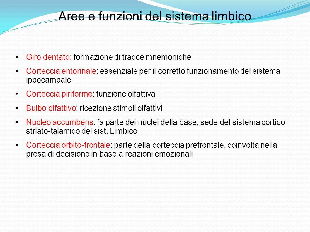 Aree e funzioni del sistema limbico