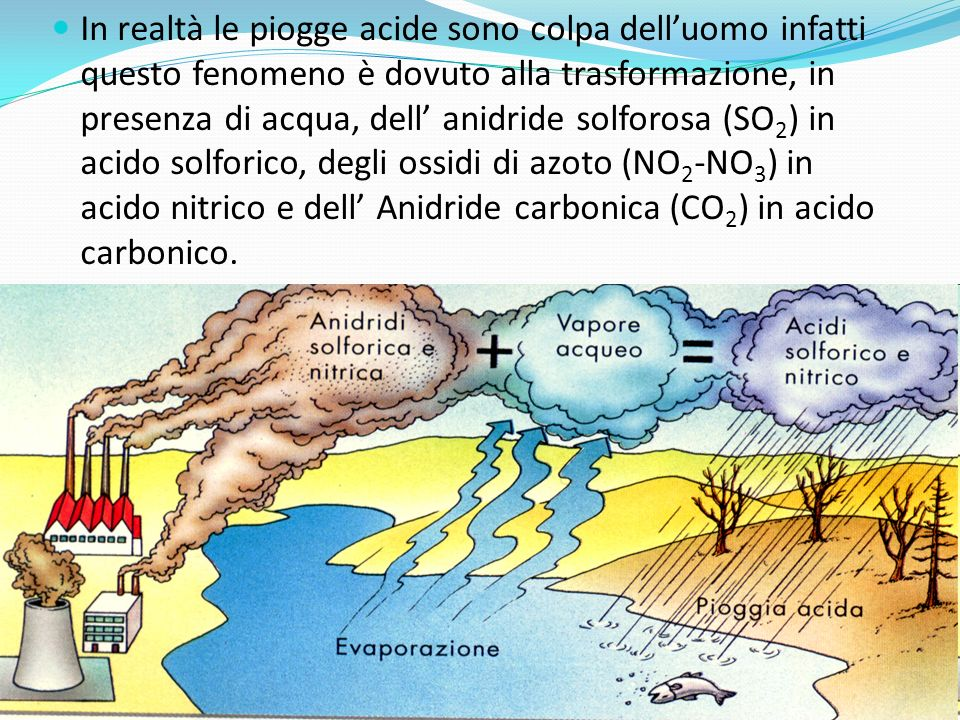 In realtà le piogge acide sono colpa dell'uomo infatti questo fenomeno è dovuto alla trasformazione, in presenza di acqua, dell' anidride solforosa (SO2) in acido solforico, degli ossidi di azoto (NO2-NO3) in acido nitrico e dell' Anidride carbonica (CO2) in acido carbonico.