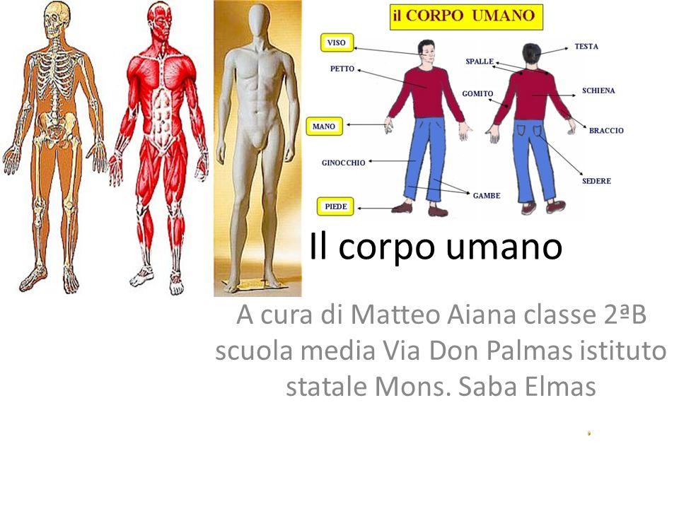 Il corpo umano A cura di Matteo Aiana classe 2ªB scuola media Via Don Palmas istituto statale Mons.