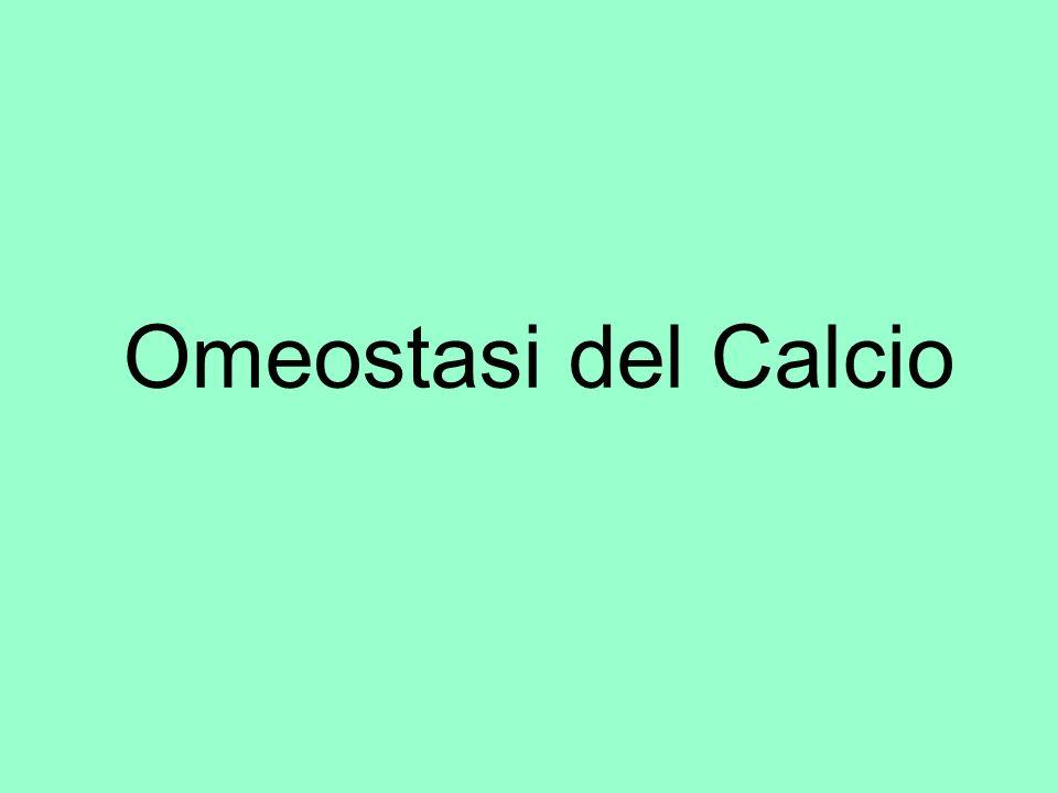 Omeostasi del Calcio