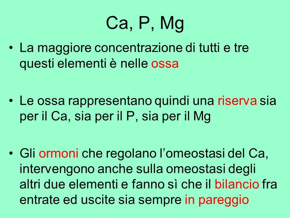 Ca, P, Mg La maggiore concentrazione di tutti e tre questi elementi è nelle ossa.