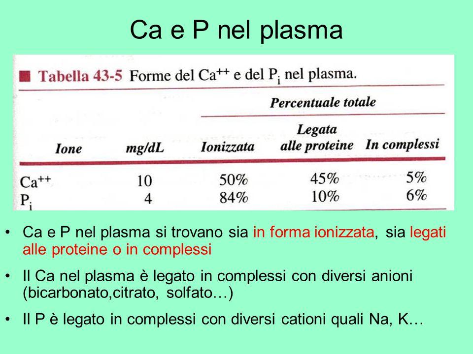 Ca e P nel plasma Ca e P nel plasma si trovano sia in forma ionizzata, sia legati alle proteine o in complessi.