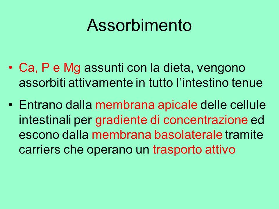 Assorbimento Ca, P e Mg assunti con la dieta, vengono assorbiti attivamente in tutto l'intestino tenue.