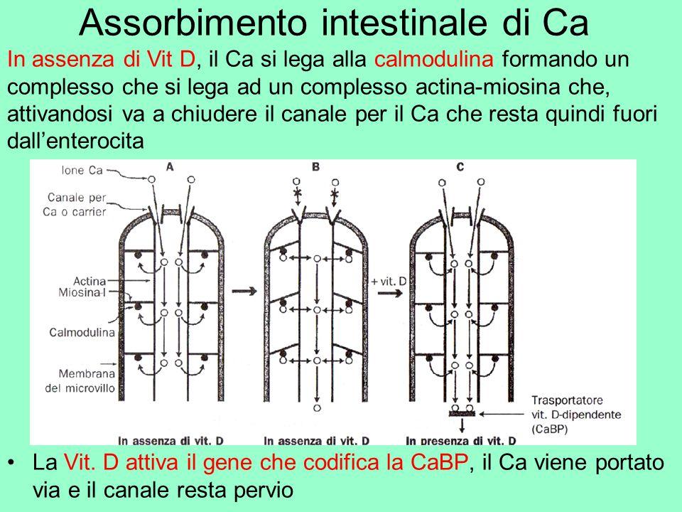 Assorbimento intestinale di Ca