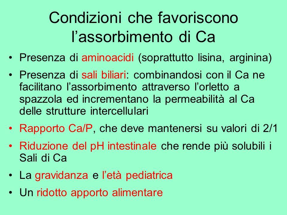 Condizioni che favoriscono l'assorbimento di Ca