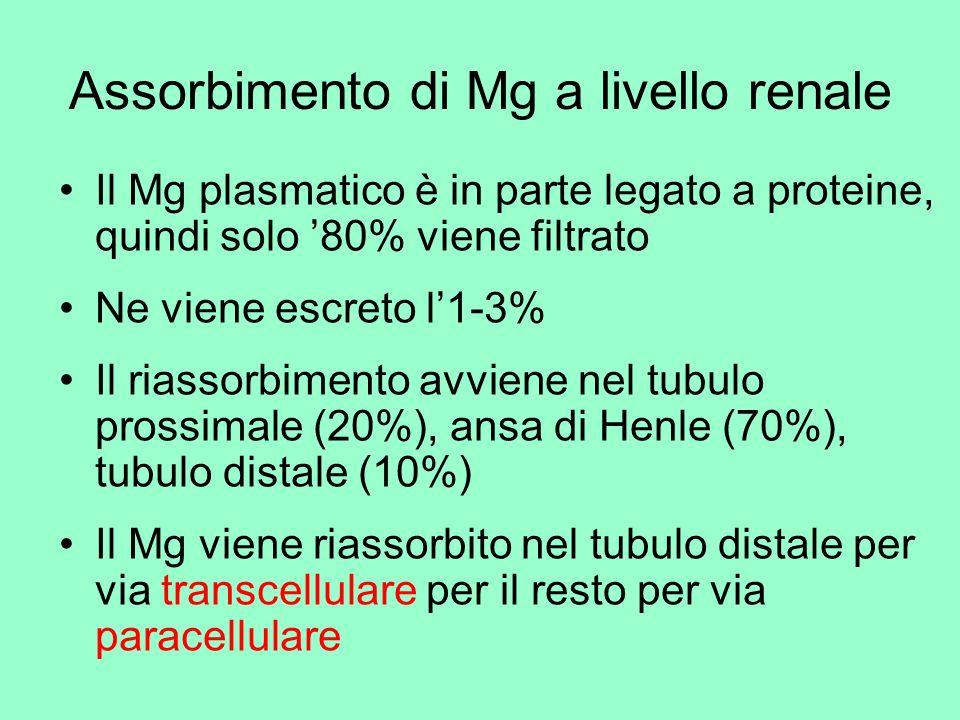 Assorbimento di Mg a livello renale