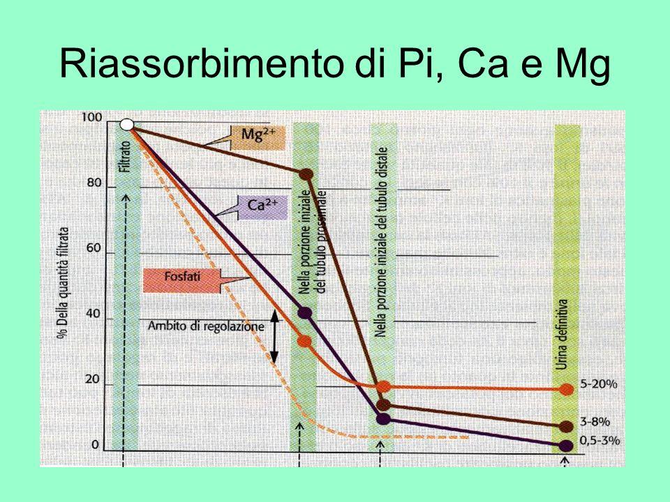 Riassorbimento di Pi, Ca e Mg