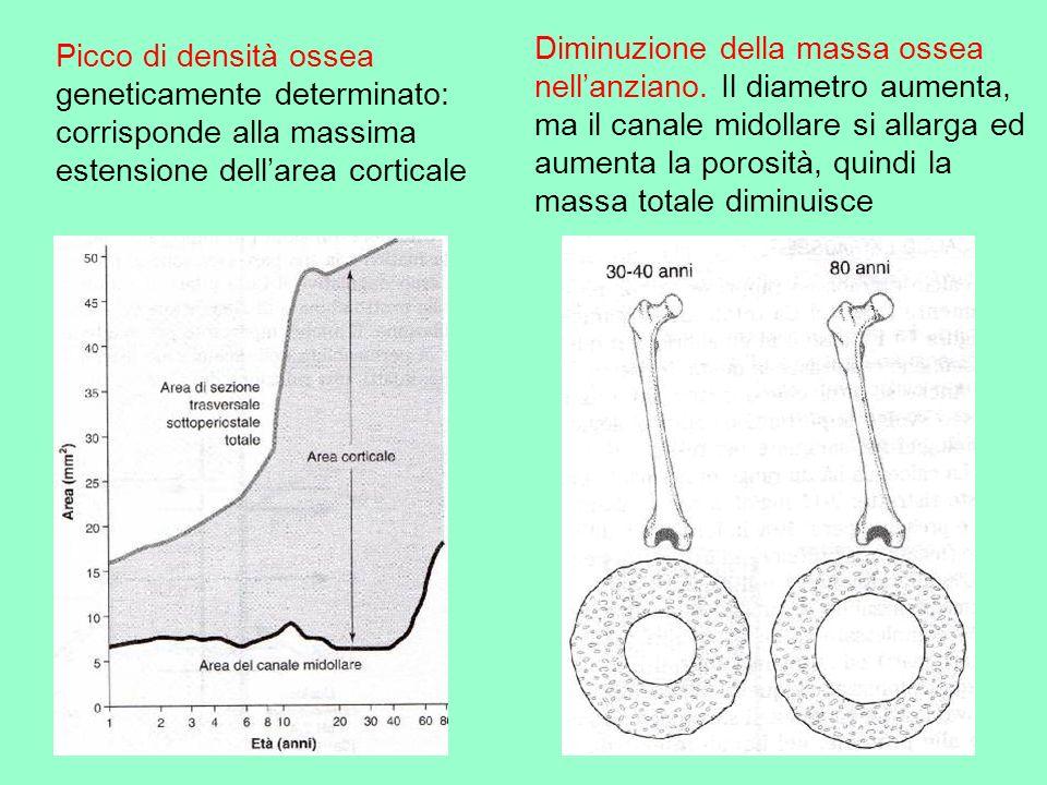 Diminuzione della massa ossea nell'anziano