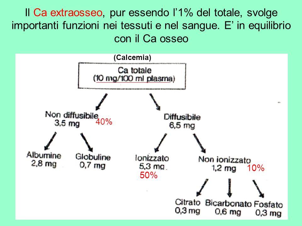 Il Ca extraosseo, pur essendo l'1% del totale, svolge importanti funzioni nei tessuti e nel sangue. E' in equilibrio con il Ca osseo