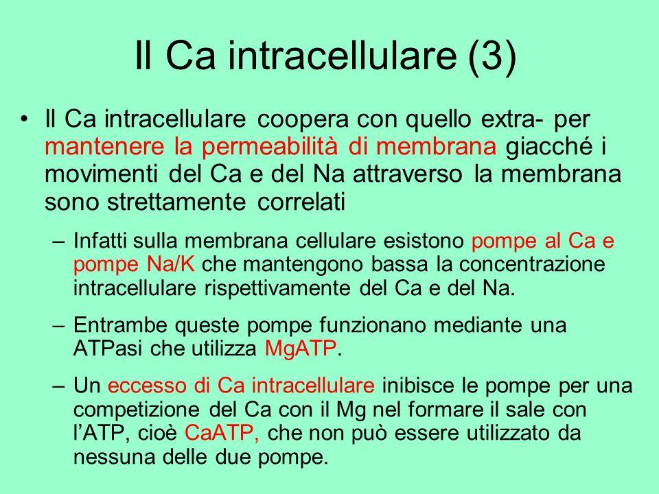Il Ca intracellulare (3)