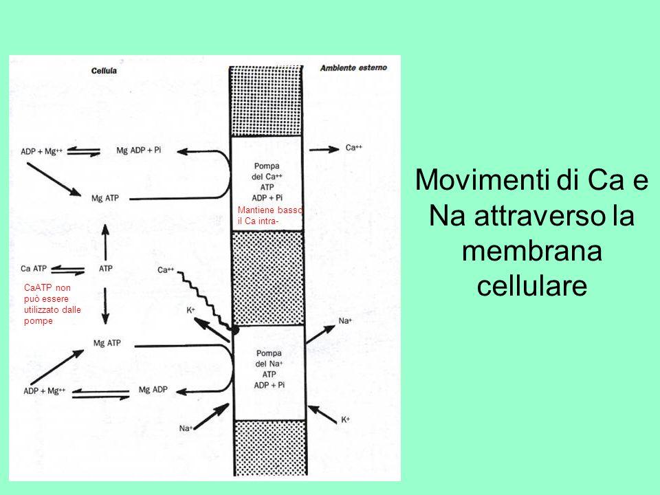 Movimenti di Ca e Na attraverso la membrana cellulare