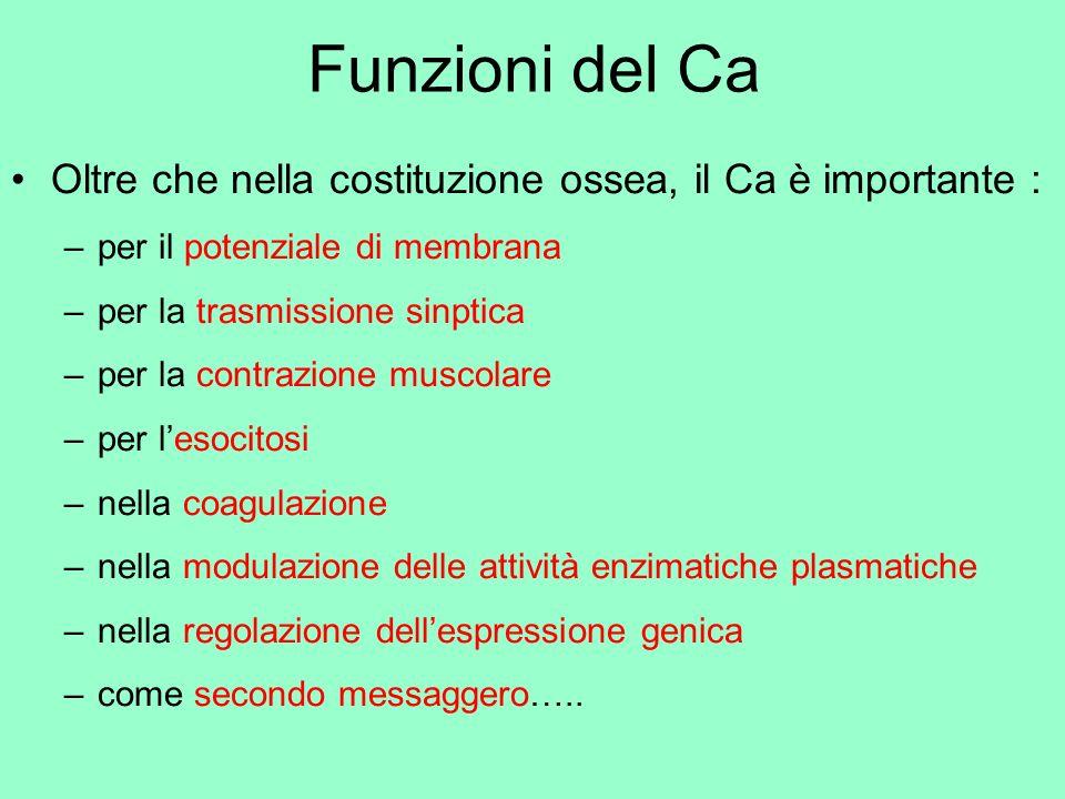 Funzioni del Ca Oltre che nella costituzione ossea, il Ca è importante : per il potenziale di membrana.